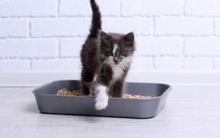 Как выбрать лоток для кошек?