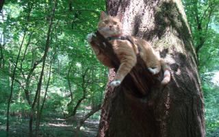 Интересные и необычные приспособления для кошек и их хозяев