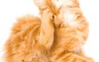 Почему кошка постоянно чешется?
