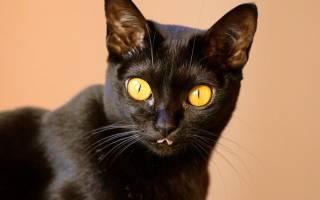 Почему кошки и коты высовывают кончик языка?