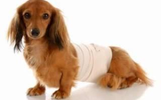 Перитонит у собак — причины и признаки заболевания