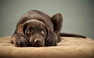 Собака боится людей: причины и метод коррекции
