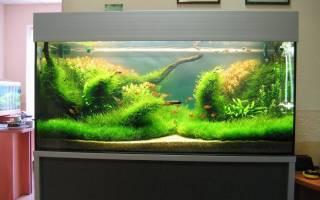 Полная замена воды в аквариуме