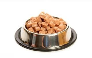 Промышленные корма для кошек: советы ветеринаров