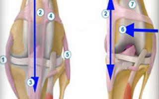Вывих коленного сустава у кошки: стадии развития патологии и методы лечения