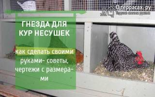 Как сделать гнездо для курицы: хитрое гнездо для кур