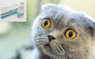 Насморк у кошки: симптомы и лечение