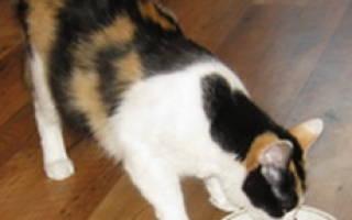 Как приготовить корм для кошек