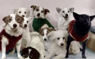 Собаки космонавты: четвероногие герои ХХ века