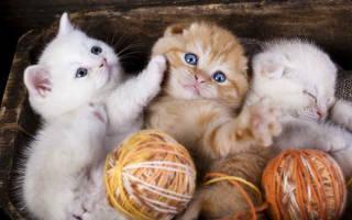 Как кормить котенка в 3 месяца сухим кормом: основные правила