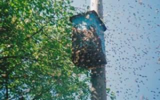 Как поймать рой: ловушки для пчел