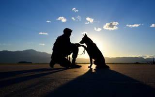 Как научить собаку слушаться