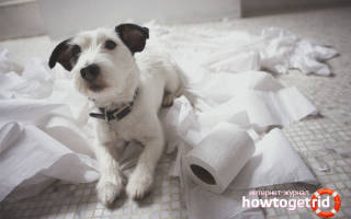 Как приучить собаку к туалету на улице