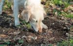 Как отучить собаку есть экскременты – 8 верных способов