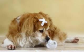 Методы лечения гнойных ран у собак
