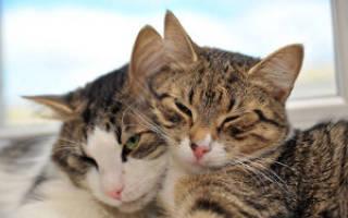 Маленькие дети и кошки: что делать, если дружбы нет?