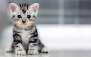 Как легко приучить кошку к лотку?