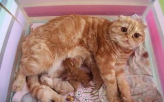 Как выглядит пробка у кошки и ее назначение