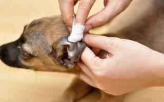 Как чистить собаку