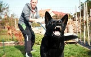 Агрессия у собак: разбираемся в причинах и способах устранения