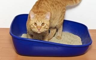 Уролитиаз у кошек: причины, диагностика и лечение болезни