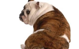 Список основных болезней позвоночника у собак: симптомы и лечение