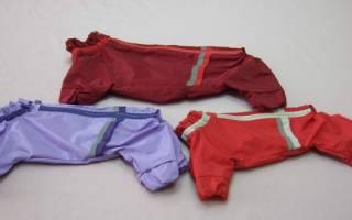 Одежда для Пекинесов: покупать, заказывать или шить?