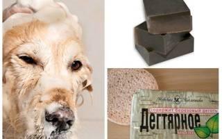 Дегтярное мыло помогает избавиться от блох у кошек