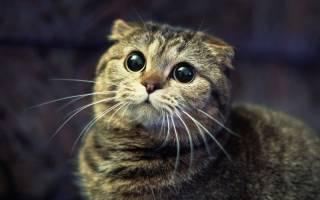 Невралгия у кошек: характеристики заболевания и способы ее диагностики