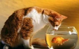 42 удивительных факта о жизни кошек!