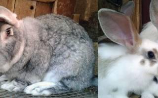 Самое необходимое оборудование для кроликов: практические советы