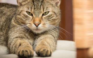 Почему урчат котята