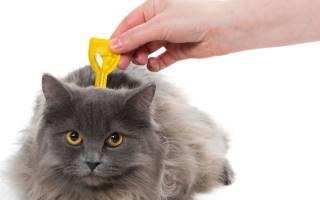 Лучший препарат от глистов для кошек