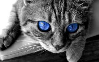 Откуда у домашней кошки могут появиться блохи