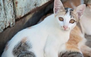Что делать, если у кота понос с кровью