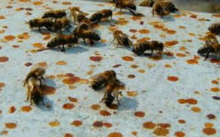Как лечить пчел: отравление и понос у пчел