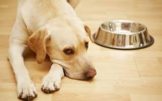 Собака не пьет воду: чем это может быть опасно