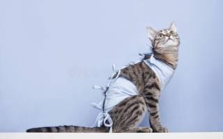 Сколько кошке ходить в бандаже после стерилизации