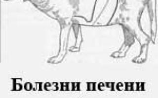Печеночная недостаточность у собак признак тяжёлого заболевания