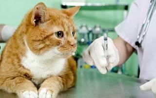 Как ставить кошке укол подкожно