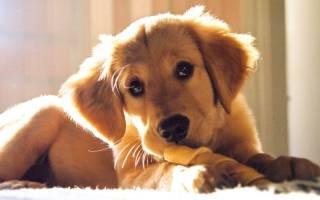 Понос у щенка в 3 месяца: причины, лечение