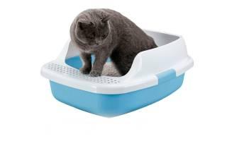 Понос с кровью у котенка: причины, диагностика, лечение