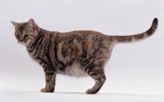 Почему кошка не может родить