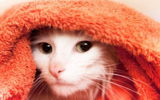 Как сушить кошку