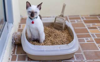 Выбираем биотуалет для кошек — обзор устройств
