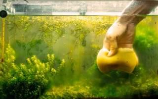 Чистим дно в аквариуме