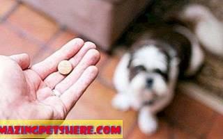 Диазепам для собак