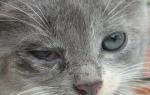 Из-за чего образуется белая пленка на глазах у кошки