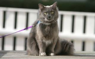 Можно ли выгуливать кошку?