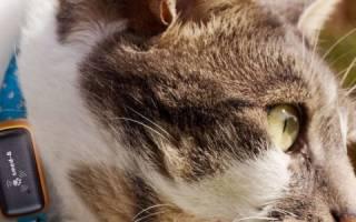 Как понять, что вам нужен ошейник для кошки с маячком
